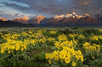 Sunrise over the Teton Range from wildflower meadows of Antelope Flats, Grand Teton National Park Wyoming.