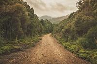 Horizontal fine art landscape of a beautiful yet gritty dirt road running through an unspoiled green forest woodland. Photograph taken West Coast Rang...