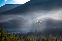 Downdraft from a helicopter rotor is evident in early morning mist.
