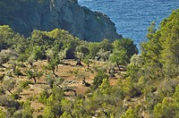 Landscape from the village of Deia in the Tramuntana mountains of Mallorca, Balearic Islands, Spain