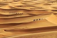 Sand Dunes, Merzouga, Sahara Desert, Morocco.
