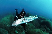 Spearfisher catching a big french barracuda in Azores, Portugal.