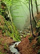 Sot de l´Obi stream. Montseny Natural Park. Barcelona province, Catalonia, Spain.