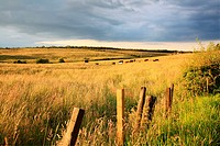 Beautiful summer fields in golden sunlight with wooden fence.