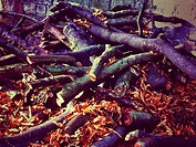 Cut branches of trees on the ground England UK United Kingdom GB Great Britain.