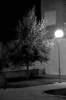 Street lamp and tree. La Bañeza, Leon Province, Spain