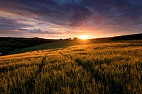 Landscape photo of a dramatic sunset over a wheat field. Val D´Orcia, Tuscany, Italy.