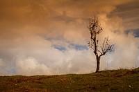 Lonely tree near Foloi forest. Eleia, Peloponnese, Greece.
