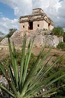 Dzibilchaltun, Maya site.