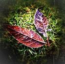 Fallen leaves in winter.