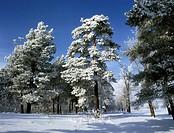 Snowy expanses of Siberia.