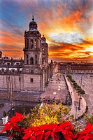 Metropolitan Cathedral Christmas in Zocalo, Center of Mexico City Mexico Sunrise.
