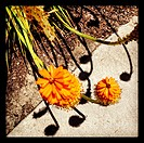 Spring flowers on a sidewalk with shadows