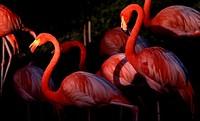 Flamingos at dusk.