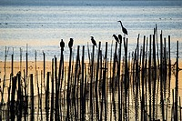Albufera Natural Park in the evening, Valencia province, Comunidad Valenciana, Spain