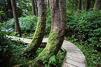 North America, Canada, British Columbia, Vancouver Island, Pacific Rim National Park Reserve, boardwalk.