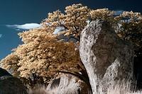 City of Rocks New Mexico.
