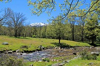 Aguilón river runs through high Lozoya Valley at late Spring while Peñalara snowcapped summit (2,428 m, the highest one in Sierra de Guadarrama mounta...