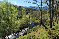 Aguilón river runs between oak and pine trees through Lozoya river in a late Spring evening, at high Lozoya Valley in the Sierra de Guadarrama mountai...