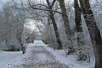 A Winter promenade through forests near the Monastery of El Paular (Rascafría, Madrid), crossing Los Batanes towards the Bosque de Finlandia after a l...