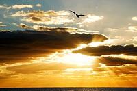 Gods Light, Gods Flight.