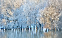 Frosty winter trees on Danube river.