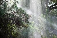 Sprinklers watering trees and plants in the morning sun in the Santa Barbara Botanic Garden; Santa Barbara; Santa Barbara County; California; CA; USA.