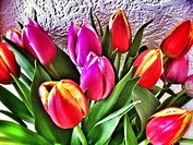 Close up of tulips in a vase.