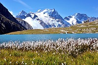 Mountain lake Lac du Goléon with cotton grass in the foreground and the mountain La Meije, Hautes-Alpes, French Alps, France.