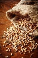 wheat grain on wooden table.