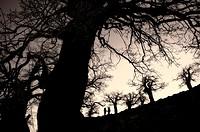 backlit two walkers among trees Ronda, Malaga, Spain