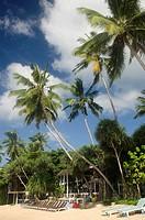 Palm-fringed beach in Mirissa, Sri Lanka.