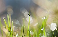 Dew drop sparkles with detail in Early Morning light on a blade of grass.