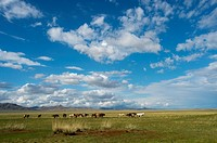 Landscape with horses in Tuul River valley, Hustai National Park, Mongolia.