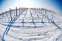 Snow covered vineyards-Bordeaux Vineyards.