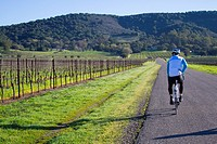 Group of 4 people cycling through the vine in Sonoma country in California on a gorgeous sunny day.