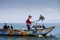 Asia, China, Yunnan, Dali, Erhai Lake, cormorant fisherman with his birds.