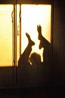 Human lage shadow on cupboard,poona,Maharashtra,India.
