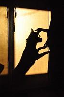Human and dog, shadow on cupboard,poona,Maharashtra,India.
