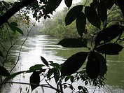 Cataniapo River in the Jungle of Puerto Ayacucho, Amazonas state, Venezuela.
