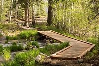 A wood plank walking bridge spans a creek in a forest in Utah.