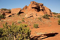 Rust colored sandstone in Utah provides a colorful base for desert brush and wild flowers.
