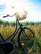 cornfield and a bicycle with bouquet and blue sky in summer.