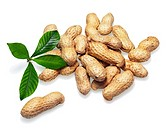 Pile of dry roasted peanuts with green leaves isolated on white background. Closeup.