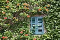 europe, italy, tuscany, sticciano, house with ivy.