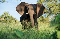SOUTH AFRICA- Kruger National Park.