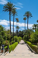 Gardens of the Alcazar palace (Seville).