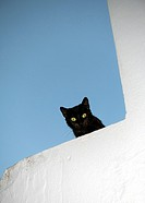 Black cat with green eyes shares down from the top of a whitewashed wall in the picturesque village of Vejer de la Frontera, voted by the Spanish as o...
