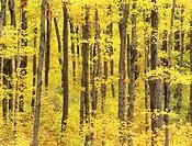 "North America, Canada, Ontario, """"Niagara Escarpment"""" part of 4 seasons."