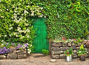 Ivy covered laundry building with a dutch door and stone wall, Bushmills, Northern Ireland, United Kingdom